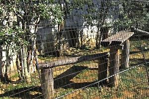 多摩動物公園のサーバルキャット舎。見覚えのある人には見覚えのある構図。