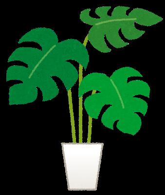 植物の繊維